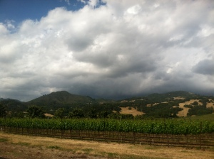 Out the car window in wine country