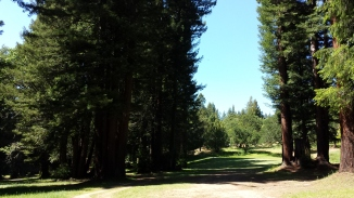 Brooktrails Course in Willits